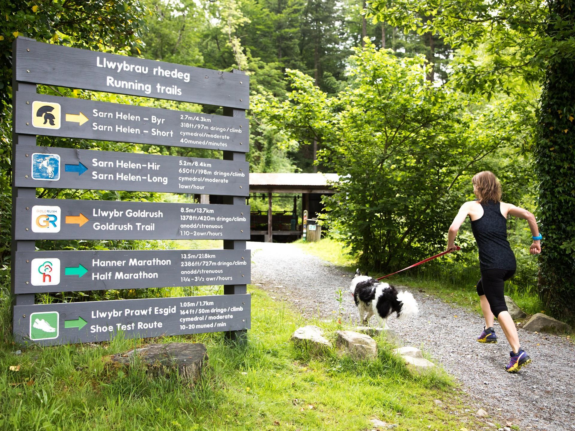 Running Trails at Coed Y Brenin