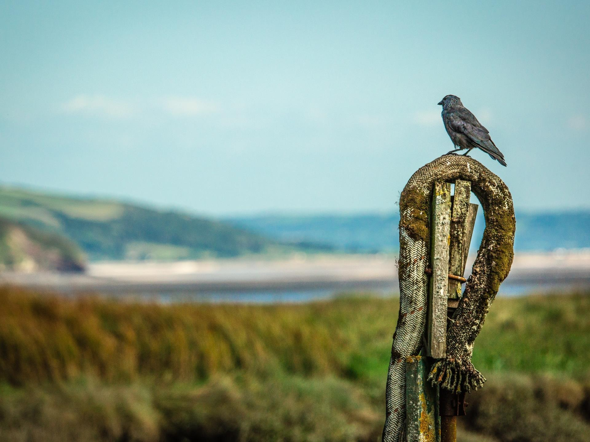 A birds' view towards Oxwich Bay