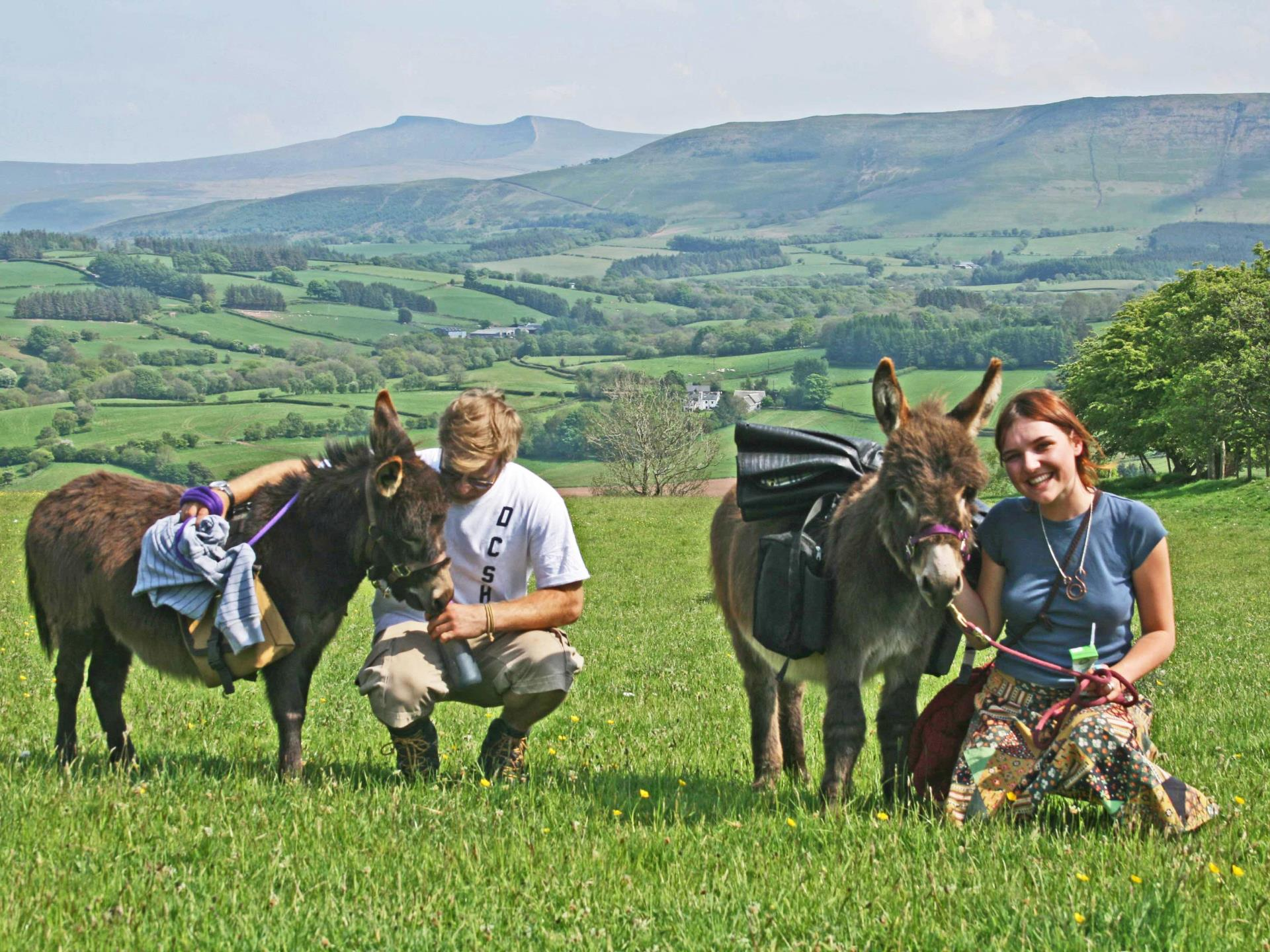 Dinky Donkey Walks in the Brecon Beacons