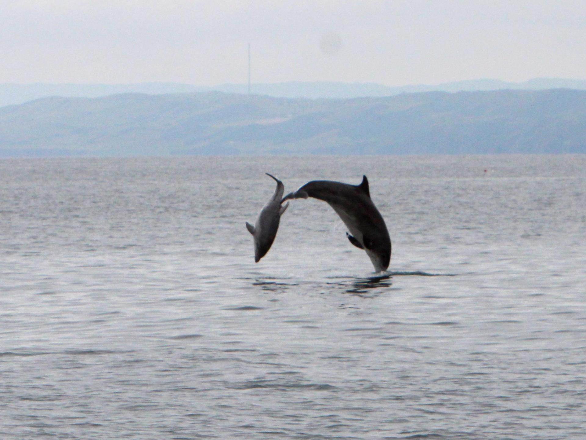 Bottlenose dolphins on an Epic Fishing Trip